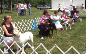 A match at the Warrenton Kennel Club showgrounds