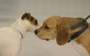 Two dogs greet each other